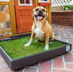 Pet Life, Grass, Labrador Retriever, Pets, Animals, Labrador Retrievers, Animais, Animales, Animaux