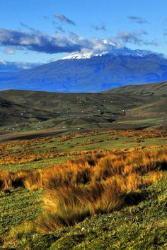 Cotopaxi National Park, Ecuador (Cotopaxi volcano in the background)