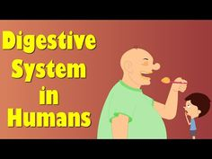 Digestive System of Human Body - YouTube