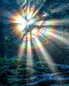I was blessed to witness this magical light yesterday morning while hiking in Lynn Canyon. The vibrant rainbow colours and light rays were just spectacular.  A totally unexpected sight, but one that left me in awe at the beauty of Mother Nature. :)