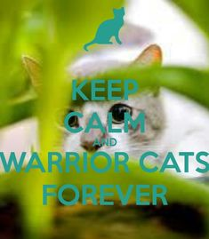 """Keep on WarriorCat-ing (^o^) my friends and I would say """"Warrior Cats forever❣""""…"""