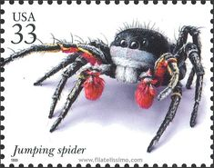 Habronattus americanus Stamp (wonder where to find this? Old Stamps, Vintage Stamps, Jumping Spider, Postage Stamp Art, Fauna, Mail Art, Stamp Collecting, Veneno, Random Acts