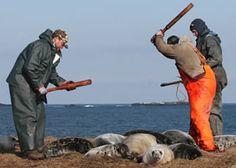 Tu abrigo de piel de foca, ¿vale ésto?