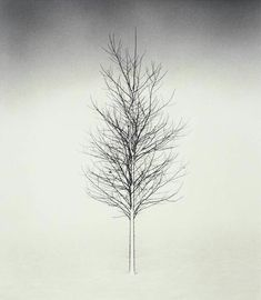 thin line tree design