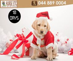 Only 10 days of Christmas shopping left. Visit Horse Etc and get your horse, dog or cat a gift from our store. We stock a full range of Rogz leads, collars and toys. #festive #gifts #lifestyle