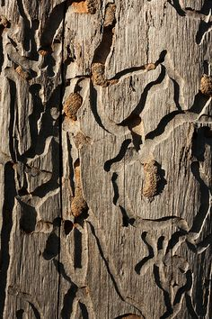Tracks on a dead tree by kasia-aus, via Flickr