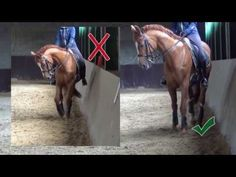 One must think when looking at a horse in motion that he hears music inside his … – Art Of Equitation Dressage Videos, Horse Exercises, Horse Riding Tips, Horse Stables, Ride Or Die, Horse Training, Horse Care, Equestrian, Horses