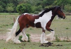 .pretty, young Vanner.  Love his beard.