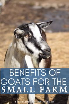 What are the benefits of adding goats to the homestead of small farm? This list of 10 benefits will help inspire you to add some cuties to your farm!