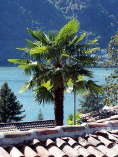 https://flic.kr/p/Je9h4Q   Morcote, Ticino, Svizzera