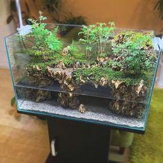 Terrarium Tank, Moss Terrarium, Garden Terrarium, Terrariums, Lizard Eye, Big Lizard, Paludarium, Vivarium, Aquarium Garden