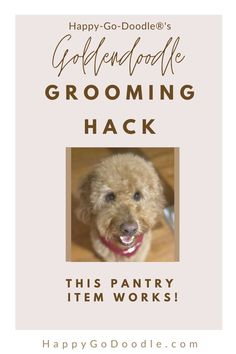 Good Goldendoodle! Even with frequent grooming, your Goldendoodle dog may get a mat. How can you tame the tangles? Here's a hack that you can do at home using a household product that you probably have right in your pantry. Watch the video and get the how-to tips to keep your Goldendoodle mat-free and happy! #goldendoodlegrooming #goldendoodlehaircare #goldendoodlemat #happygodoodle Goldendoodle Haircuts, Goldendoodle Grooming, Matted Dog Hair, Small Mats, Kong Toys, Puppy Cut, Poodle Mix, Before And After Pictures, Dog Show