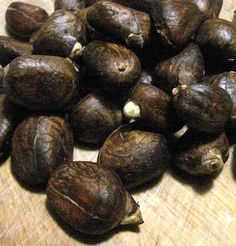These are breadnuts. Tree is similar to the breadfruit but fruit has all these nuts. So yummy when cooked.