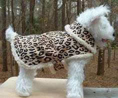 Leopard Dog Jacket  SMALL     Dog Clothing & by DogBritchesnMore, $40.00