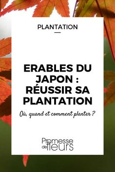 Suivez nos conseils pour réussir la plantation de l\'érable du japon : quand, où et comment planter le jardin pour profiter de son superbe feuillage coloré.