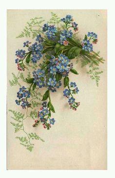Новости Art Vintage, Vintage Birds, Vintage Artwork, Vintage Ephemera, Vintage Paper, Vintage Postcards, Vintage Flowers, Botanical Art, Botanical Illustration
