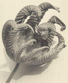 Dead Leaf   Man Ray   American, 1942   Gelatin silver print   9 1/2 x 7 13/16 in.   84.XM.1000.55