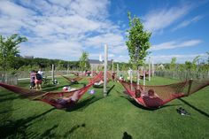 Governors Island Hammock Grove by West 8 Landscape Architecture Landscaping Tips, Garden Landscaping, Parque Linear, Landscape Architecture Design, Architecture Jobs, Architecture Portfolio, Landscape Architects, Urban Furniture, Furniture Nyc
