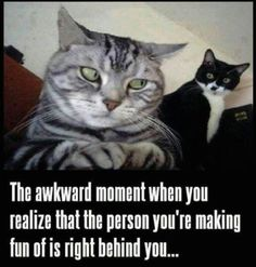 True Pictures - Search our So True memes, pictures, videos & more! Find funny but true memes that show just how hilarious life can be. Humor Animal, Animal Memes, Funny Animals, Cute Animals, Talking Animals, Animals Amazing, Crazy Cat Lady, Crazy Cats, I Love Cats