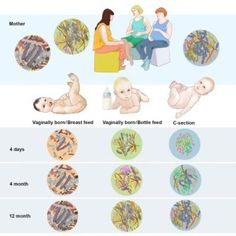 The infant gut microbiome