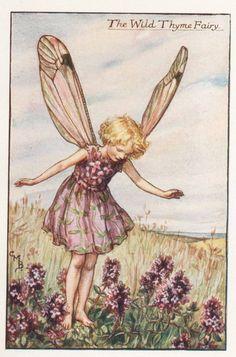 Flower Fairies: The Wild Tyme Fairy Vintage Print c1930 by Cicely Mary Barker | eBay