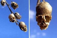 Extravagantes orquídeas que parecen otras cosas | La Bioguía