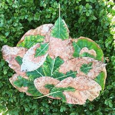 Leli Hoch is a site-specific land artist and abstract painter. Avocado Leaves, Abstract Painters, Environmental Art, Land Art, Plant Leaves, Quilting, Christmas Ornaments, Holiday Decor, Artist