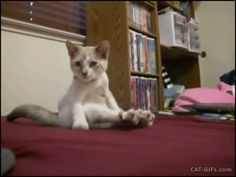 Cute Kitten sitting like human, with crossed legs. More Cute Kitten GIFs @ http://www.cat-gifs.com
