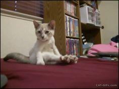 Cute Kitten sitting like human, with crossed legs. More Cute Kitten GIFs @ http://www.cat-gifs.com
