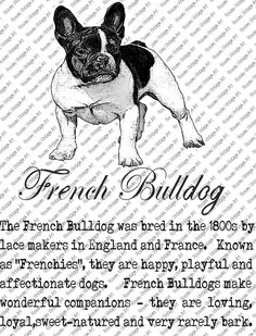 FRENCH BULLDOG DOWNLOAD Instant Digital Vintage Art with Description Printable Frame Cards Fabric Transfer Iron On by RosiesVintageArtShop on Etsy