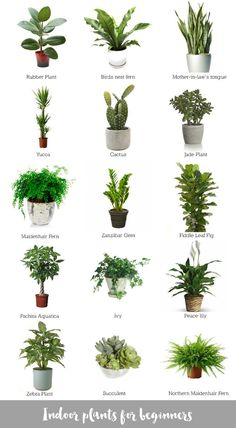 Indoor crops for freshmen - Katrina Chambers | Way of life Blogger | Inside Design Blogger Australia.  See even more at the picture link