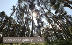 Woburn Forest Video Gallery
