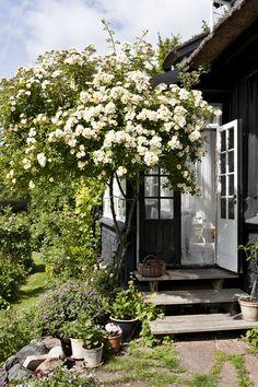 Entrada a porche con enredadera florida