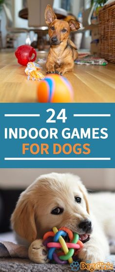 Indoor activities for dogs can be a great way to provide mental and physical stimulation although they aren t a replacement for walks here s a huge list of fun indoor games and activities dogs doggames dogactivities winterboots winterstiefeletten Indoor Games For Toddlers, Fun Indoor Activities, Rainy Day Activities, Dog Activities, Games For Puppies, Dog Games, Best Toys For Puppies, Best Dogs For Kids, Brain Games For Dogs