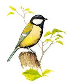 naši ptáci - Hledat Googlem