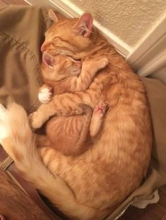 Click the Photo For More Adorable and Cute Cat Videos and Photos - Adorable Cats and Cute Kittens - Katzen Bilder Cute Little Animals, Cute Funny Animals, Funny Cats, Weird Cats, Cute Cats And Kittens, I Love Cats, Adorable Kittens, Images Of Cute Kittens, Kittens Cutest Baby