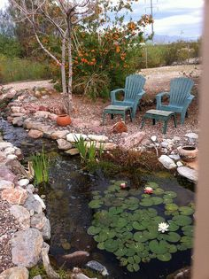 Streamside in the Desert by The Pond Gnome, via Flickr
