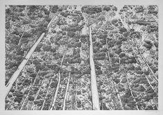 Michael Amery | Trees-by-man---31