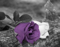 Black White Purple Rose Flower Wall Art by LittlePiePhotoArt, $18.99