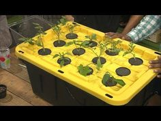 Building an Inexpensive Hydroponics/Aeroponics System - YouTube