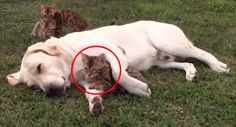 What These Bengal Kittens Do With Tucker The Dog Will Melt Your Heart. Awwww!