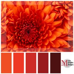 I absolutely adore this beautiful flower and it's lovely orange color! Color Palette #7