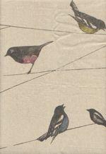 Garden Birds via Louise Body