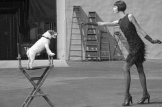 Karlie and Uggie, the Jack Russel Terrier for Americana Manhasset. / #fashion