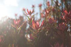 Glendyn Ivin [photo by]