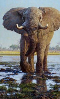 Kiongozi, 2009 - Works - Wildlife Art of John Banovich Asian Elephant, Elephant Love, Elephant Art, Elephant Photography, Animal Photography, Wildlife Photography, Wildlife Paintings, Wildlife Art, Wild Life