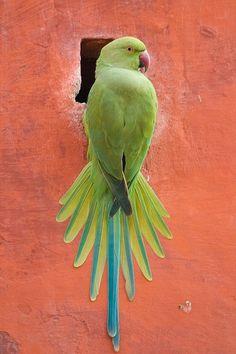 Stucco Parrot