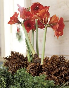 §§§ . A New England Cottage Christmas ... 