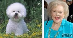 Cute and cuddly....both of them!! I love Betty White and bijou's are so darn cute too!  This one looks just as happy and full of life as Miss Betty White!