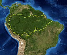 The Amazon Rainforest is a moist broadleaf forest that covers most of the Amazon Basin of South America, with the majority located within Brazil.